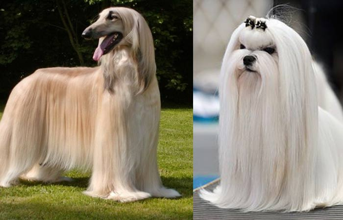 Long Haired Dogs Small Medium Large